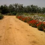 Countryside- salento
